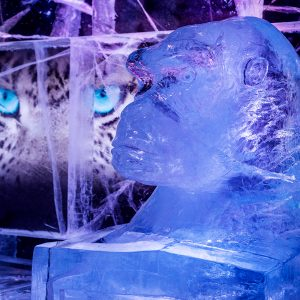 Visit Icebar photo gallery and browse all our themes